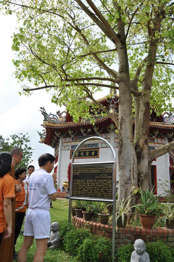 Kong Meng San Phor Kark See Monastery KMSPKS Community